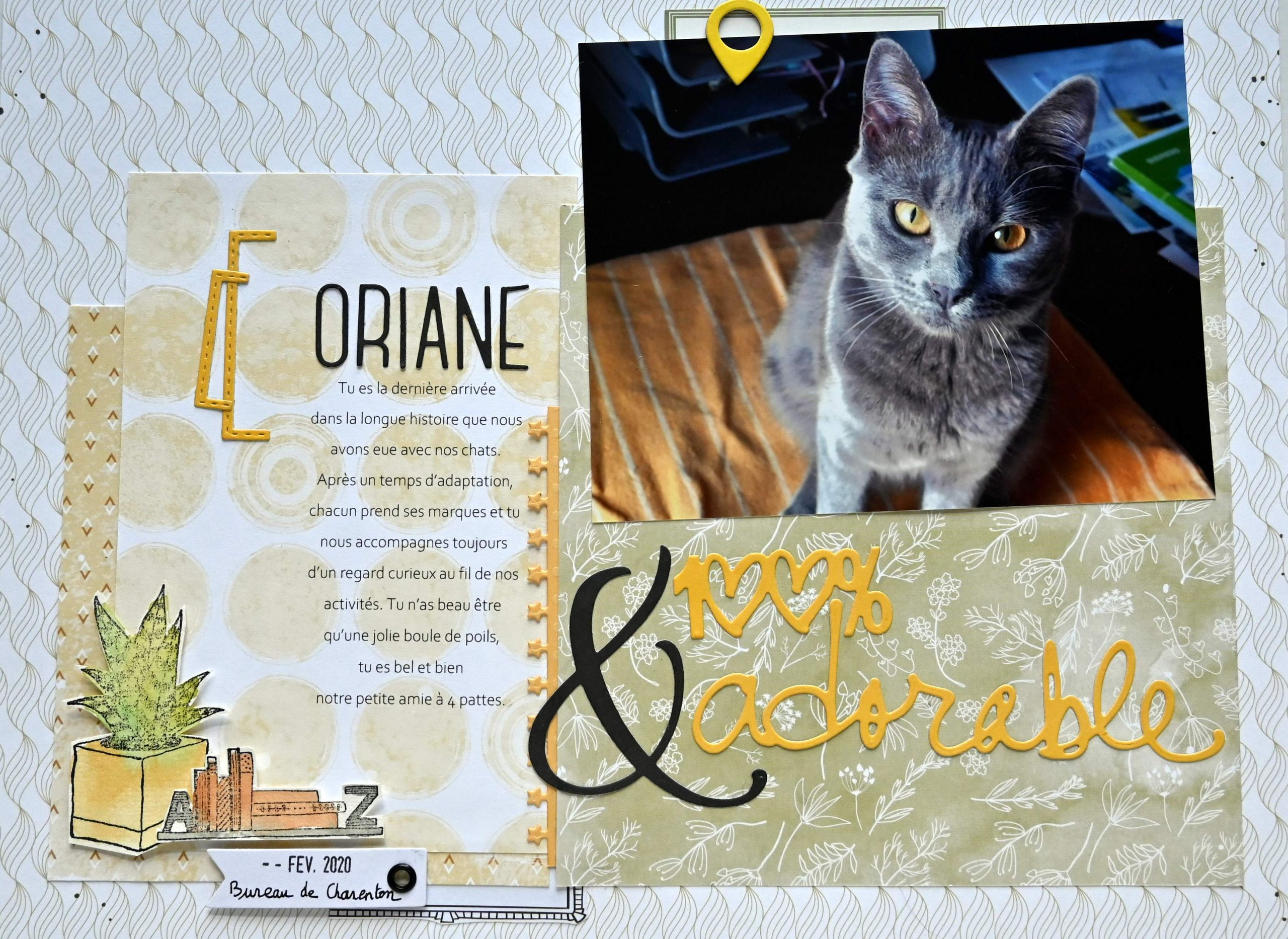 chat photographie creation scrapbooking