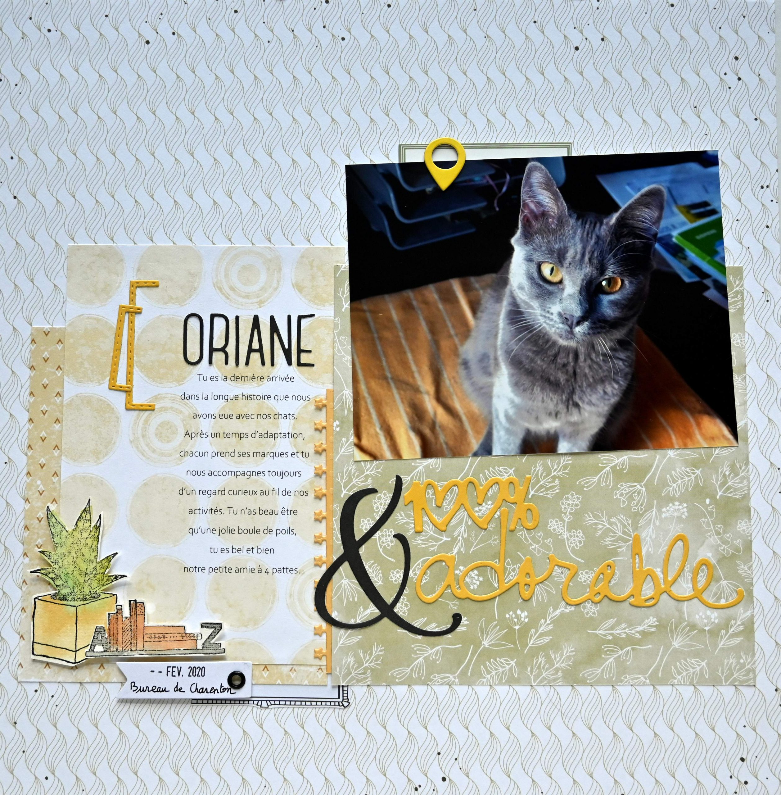 chat photogrpahie création scrapbooking
