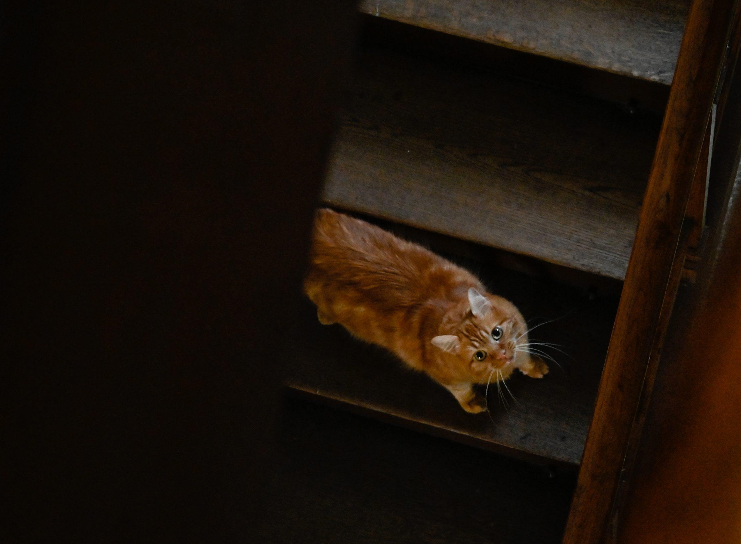 chat dans un escalier un jour dans la vie