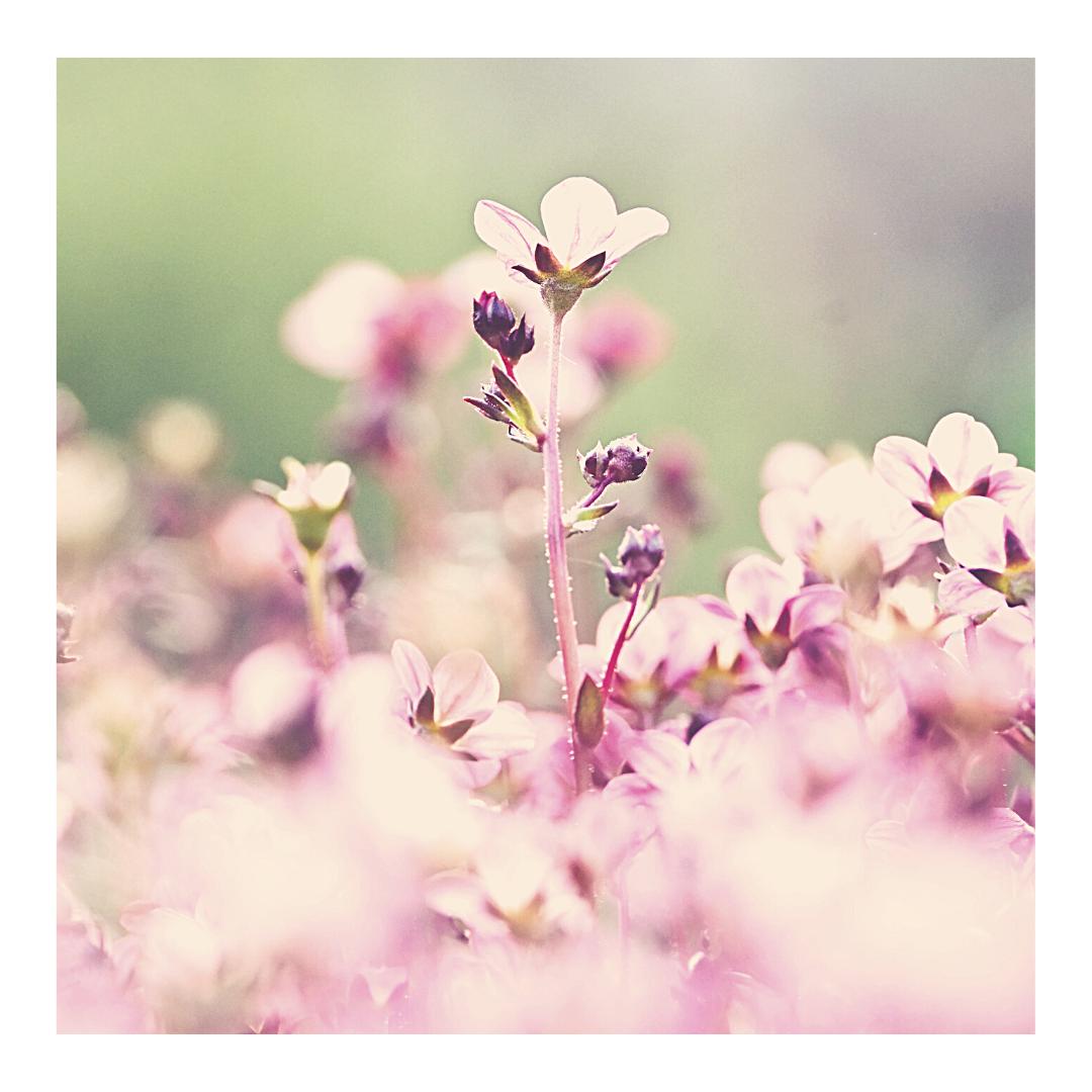 fleurs dans un jardin aux premiers jours du printemps